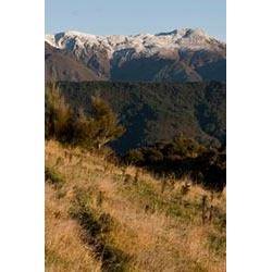 5-Day/4-Night New Zealand Sika Deer with Kaweka Hunting