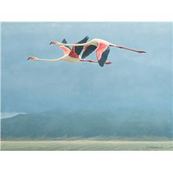 Robert Bateman -Flamingos in Ngorongoro