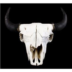 Great American Montana Trophy Buffalo Skull