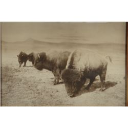"L.A. Huffman collotype A Buffalo Family,  10"" x 12"", framed"
