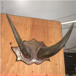 Mounted Horns