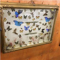 """Butterfly Effect in Shadow Box (37"""" x 28"""")"""