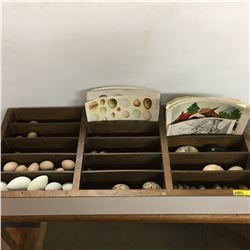 """""""Egg"""" Collection"""