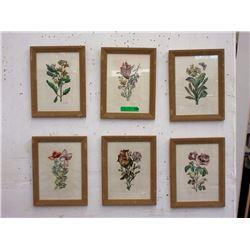 6 Vintage Jo Jacobus de Rubeis Framed Botanicals