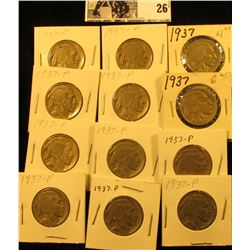 "(12) 1937 P Buffalo Nickels all carded in 1 1/2"" holders. Some slightly better grades."