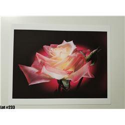 """Rose"" by Scott Peck, Paper, 14X11"