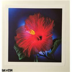 """Hibiscus"" by Scott Peck, Paper, 14X11"