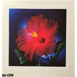 "Qty 5 ""Hibiscus"" by Scott Peck, Paper, 14X11"