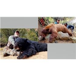 Hunt Package - Black Bear Hunt in New Mexico Sponsored by: Pinnacle Outfitters