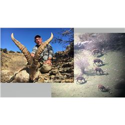 Hunt Package - Beceite Ibex Spain Sponsored by: Corju Hunting