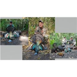 Hunt Package - Occellated Turkey Hunt Sponsored by: Balam Mexico Outfitters