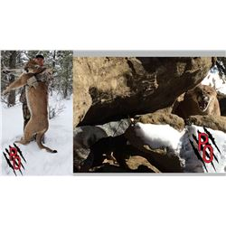 Hunt Package - Cougar Hunt in New Mexico Sponsored by: Pinnacle Outfitters