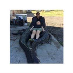 Florida Trophy Alligator Hunt