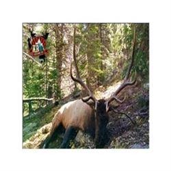 Colorado Bull Elk Hunt