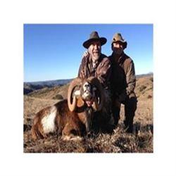 Spanish Red Deer & Ibex Hunt