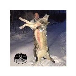 Alberta Wolf Hunt