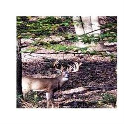 Pennsylvania Trophy Whitetail Hunt