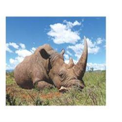 5 Day Vita Dart of a White Rhino