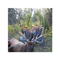 Colorado Elk Hunt