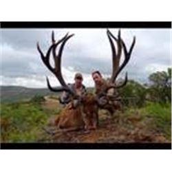Trophy Red Deer OR Fallow Deer OR Mouflon hunt in Spain