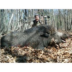 Upper Peninsula boar hunt