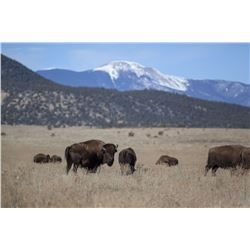 PHILMONT: 2-Day American Bison Hunt for One Hunter and One Non-Hunter in New Mexico