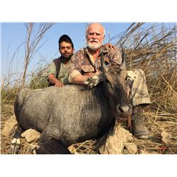 MORO GAME RESERVE: 3-Day Blue Bull Hunt for One Hunter in Pakistan - Includes Trophy Fee