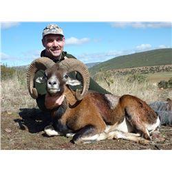 FERNANDO SAIZ: 3-Day Iberian Mouflon Sheep Hunt for Two Hunters in Spain - Includes Trophy Fees