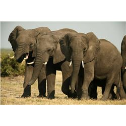 NDUMO SAFARIS: 10-Day Non-Export Elephant Hunt for One Hunter and One Non-Hunter in Namibia