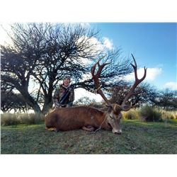TS BUENOS AIRES: 4-Day Red Stag Hunt for Three Hunters in La Pampa, Argentina - Includes Trophy Fees