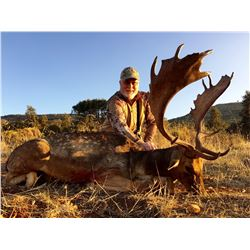 CAZATUR: 5-Day Red Deer, Fallow Deer OR Mouflon Sheep Hunt for One Hunter/One Non-Hunter in Spain