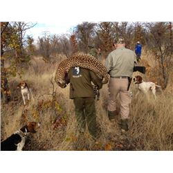 CHAPUNGU: 14-Day Leopard and Plains Game Safari for One Hunter in Zimbabwe - Includes Trophy Fee