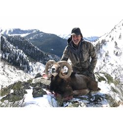 TROPHY HUNTING SPAIN: 4-Day Iberian Mouflon Sheep  Hunt for One Hunter and One Non-Hunter in Spain -
