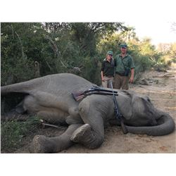 DESFOUNTAIN: 10-Day Tuskless Elephant Hunt for One Hunter/One Non-Hunter in Zimbabwe-Includes Trophy