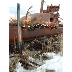 BROWN'S LODGE: 3-Day Wild Pheasant Hunt for Two Hunters in South Dakota