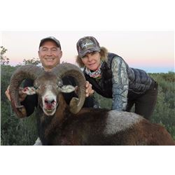EUROHUNTS: 4-Day Mouflon Sheep Hunt for One Hunter/One Non-Hunter in Spain - Includes Trophy Fees
