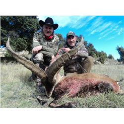 SALVA MONFORTE: 4-Day Beceite Ibex Hunt for Two Hunters in Spain - Includes Trophy Fees