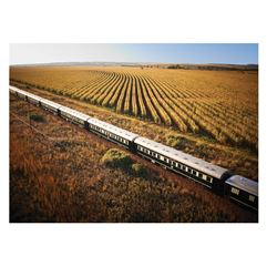 ROVOS RAIL: 8-Day Luxurious Rovos Rail Wingshooting Adventure for One Hunter and One Non-Hunter in S