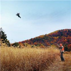 3-day/2-night Virginia Pheasant, Quail and Chukar Hunt for Two Hunters and Two Non-Hunters