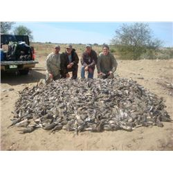 3-day/4-night Mexico Dove, Quail and Yellowtail Fish Trip for Two Hunters and Two Observers