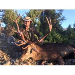 5-day Spain Choice of Red Deer, Iberian Mouflon or Fallow Deer Hunt for One Hunter and One Observer