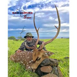 2-day Hawaii Free-Range Trophy Axis Deer & Feral Goat Combo Package for One Hunter