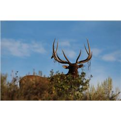 3-day Idaho Elk Hunt for One Hunter and One Observer