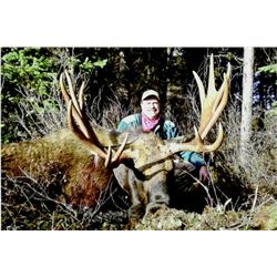 7-day British Columbia Shiras Moose Hunt for One Hunter