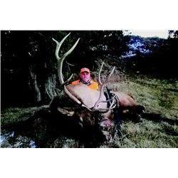 6-Day Colorado Rocky Mountain Elk Hunt for One Hunter