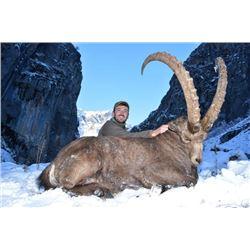 8-day Tajikistan Mid-Asian Ibex Hunt for One Hunter