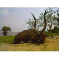 10-day Uganda Ssese Island Sitatunga Hunt for One Hunter and One Observer