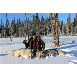 5-day Alberta Wolf Hunt for Two Hunters