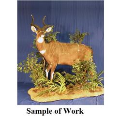 Custom Taxidermy Service