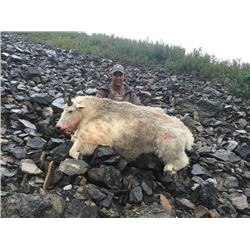 10-day British Columbia Mountain Goat and Wolf Hunt for One Hunter
